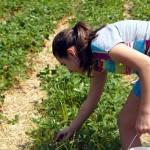 Matilda picking strawberries