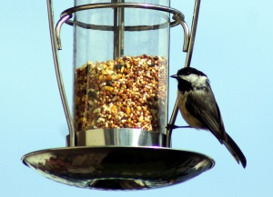 At the birdfeeder