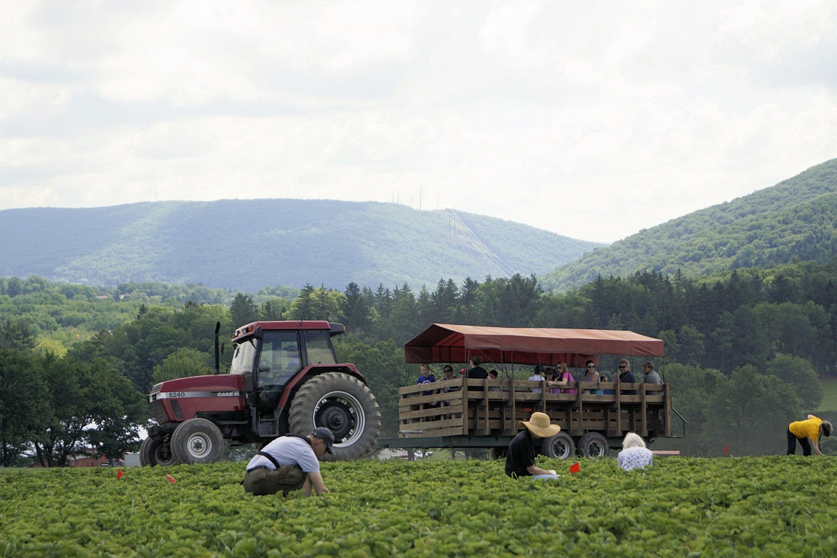 Tractor and pickers